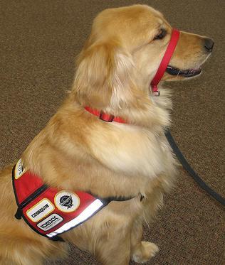 Stefanie And Service Dog Raleigh
